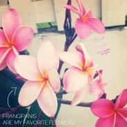 frangipanis copy