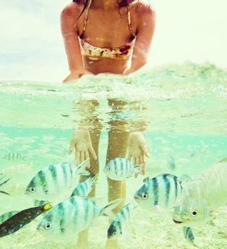 8-2 fish