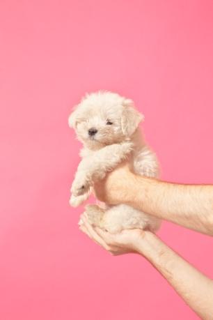 8-2 puppy