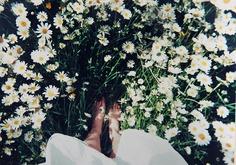 8-30 daisies