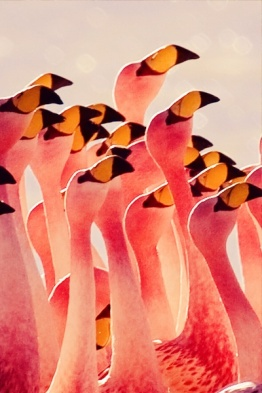 8-9 flamingos