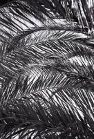 10-18 palm