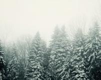 12-13 evergreens