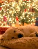12-27 puppy