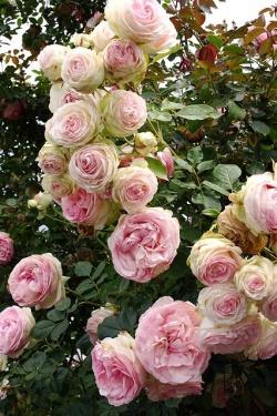 1-10 roses