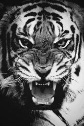 1-24 tiger