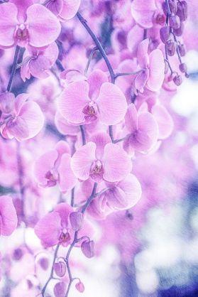 1-31 orchids