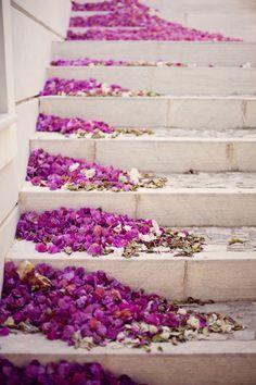 1-31 rose petals