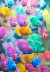 7-7 fish
