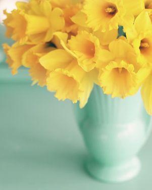 3-28 daffodils