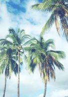 06-13 Palm Trees