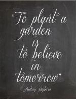 8-1 garden