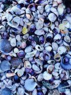 8-8 shells