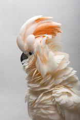 9-5 bird