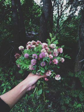 10-10 clover