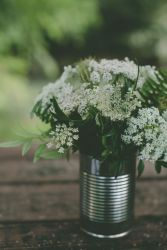 10-10 queen anne's lace