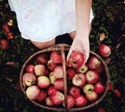 10-31 apples