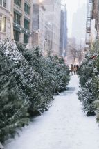 12-19 christmas trees