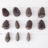 12-26 pine cones 2