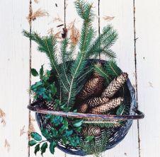 12-26 pine cones