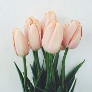 1-9 tulips