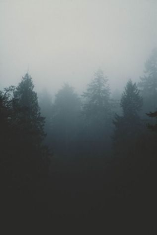 3-6 trees